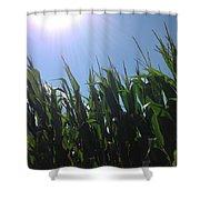 Corn Maze 02 Shower Curtain