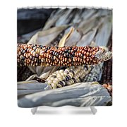 Corn Of Many Colors Shower Curtain by Caitlyn  Grasso