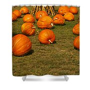 Corn Plants With Pumpkins In A Field Shower Curtain