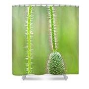 Corn Poppy Bud Shower Curtain