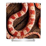 Corn Snake P. Guttatus On Tree Bark Shower Curtain
