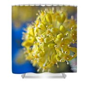 Cornelian Cherry. Cornus Mas. European Cornel Shower Curtain
