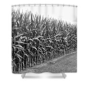 Cornfield Black And White Shower Curtain
