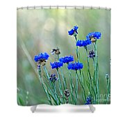 Cornflowers Shower Curtain