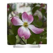 Cornus Florida - Pink Dogwood Blossoms Shower Curtain