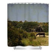 Corolla Pony Shower Curtain