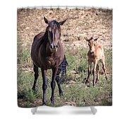 Cortez Colorado Mustangs Shower Curtain