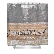 Corvus Field Shower Curtain