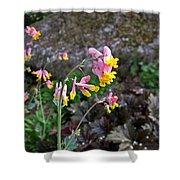 Corydalis In Garden Shower Curtain