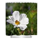 Cosmea And Bee Shower Curtain