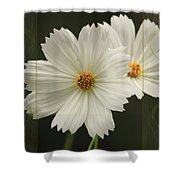 Cosmos And Hearts Shower Curtain