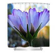 Cosmos Petals Up Shower Curtain