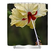 Costa Rica Hibiscus Shower Curtain