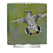 Costas Hummingbird Shower Curtain
