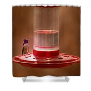 Costa's Hummingbird Keeping Guard Shower Curtain