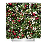 Cotoneaster Bush Background Shower Curtain