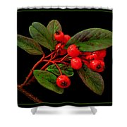 Cotoneaster Shower Curtain