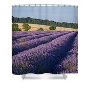 Cotswolds Lavender Shower Curtain