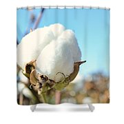 Cotton Boll I Shower Curtain