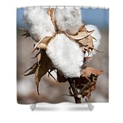 Cotton Bolls  Shower Curtain