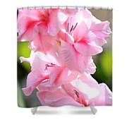 Cotton Candy Gladiolus Shower Curtain
