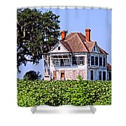 Cotton Fields Back Home Shower Curtain
