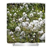 Cotton Grass On Homestead Trail In Homer-ak- Shower Curtain