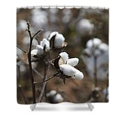 Cotton Southern Gold Shower Curtain