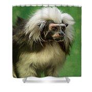 Cotton-top Contemplation Shower Curtain