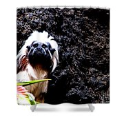 Cotton Top Tamarin Shower Curtain