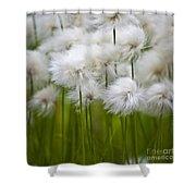 Cottongrass Shower Curtain