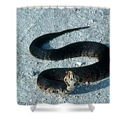 Cottonmouth Threat Display Shower Curtain