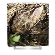 Cottontail Kits Shower Curtain