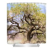 Cottonwood Tree Digital Painting Shower Curtain