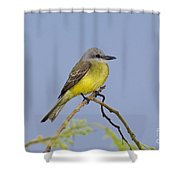 Couchs Kingbird Shower Curtain