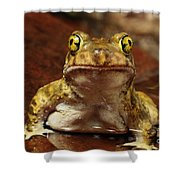 Couchs Spadefoot Toad Shower Curtain