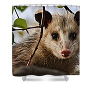 Coucou - Close-up Shower Curtain