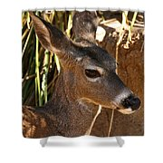 Coues White-tailed Deer - Sonora Desert Museum - Arizona Shower Curtain