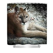 Cougar Country Shower Curtain