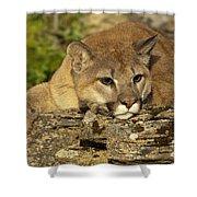 Cougar On Lichen Rock Shower Curtain