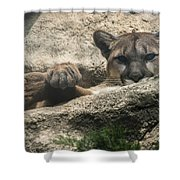 Cougar Spotted Me Shower Curtain