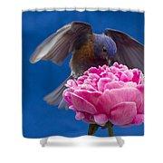 Count Bluebird Shower Curtain by Jean Noren