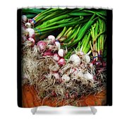 Country Kitchen - Onions Shower Curtain