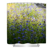 Country Road 3 Shower Curtain