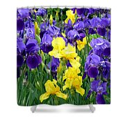 Country Road Irises  Shower Curtain