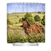 Countryside Horse Shower Curtain