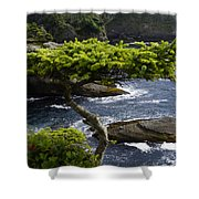 Courageous Tree  Shower Curtain