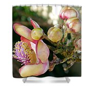 Couroupita Guianensis - Cannonball Tree Flowers Shower Curtain