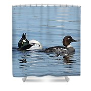 Courting Common Golden Eyes Shower Curtain