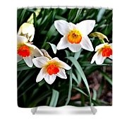Covenant Daffodils Shower Curtain
